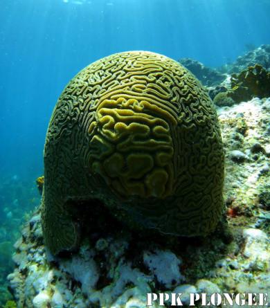 Plongée Guadeloupe, PPK Plongée Dive Center,