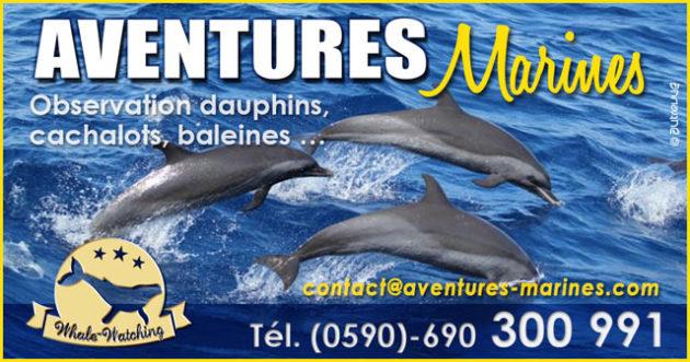 Observation cétacés (baleines, cachalots et dauphins) en Guadeloupe
